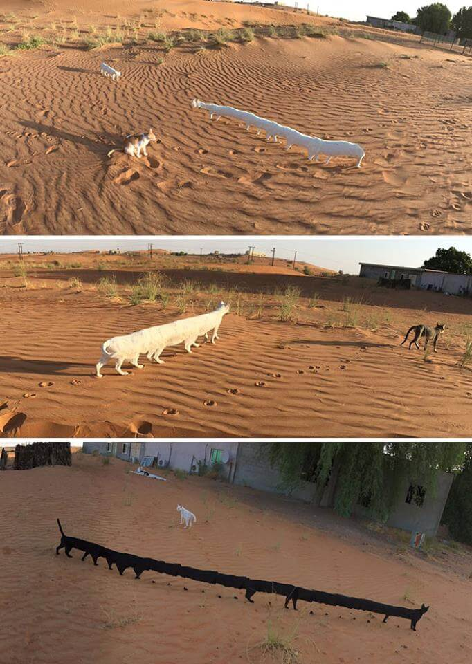failed animals panoramic photos