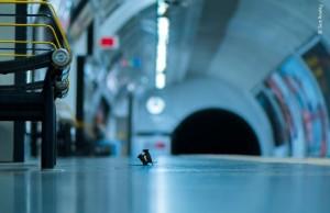 Station Squabble_Wildlife Photographer Of The Year