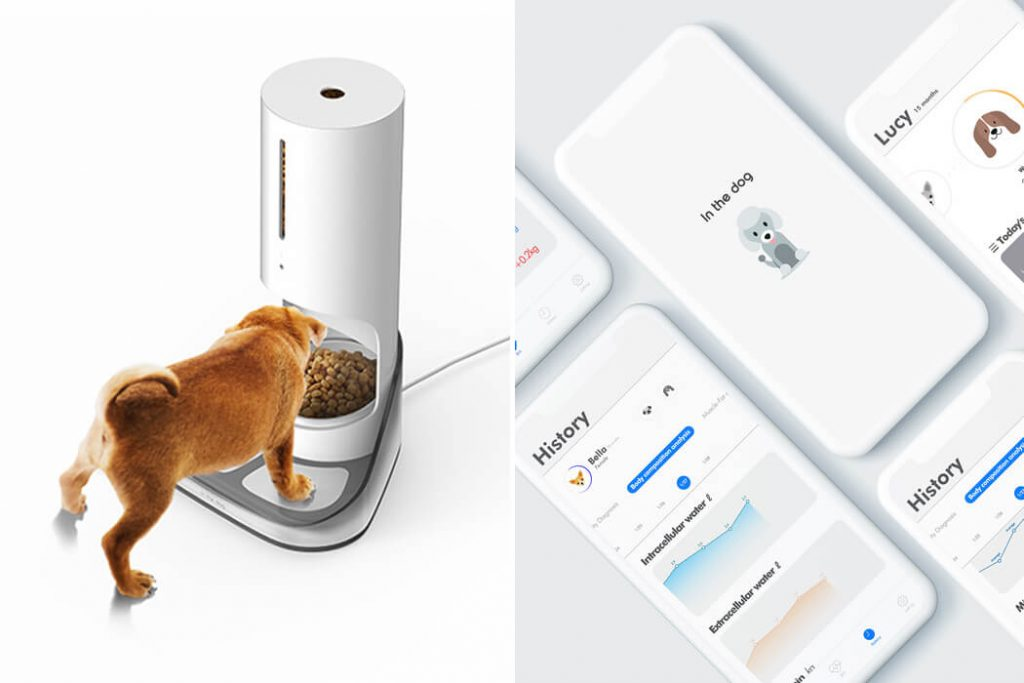 automatic feeder for dog