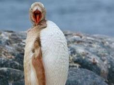 blonde penguin 7 (1)