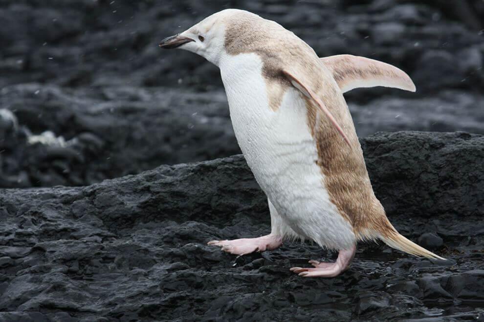 blonde penguin 8 (1)