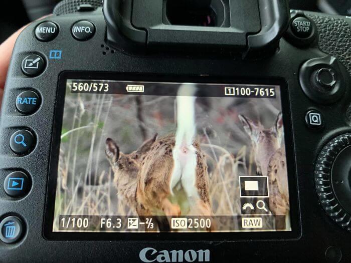 crap images of wildlife