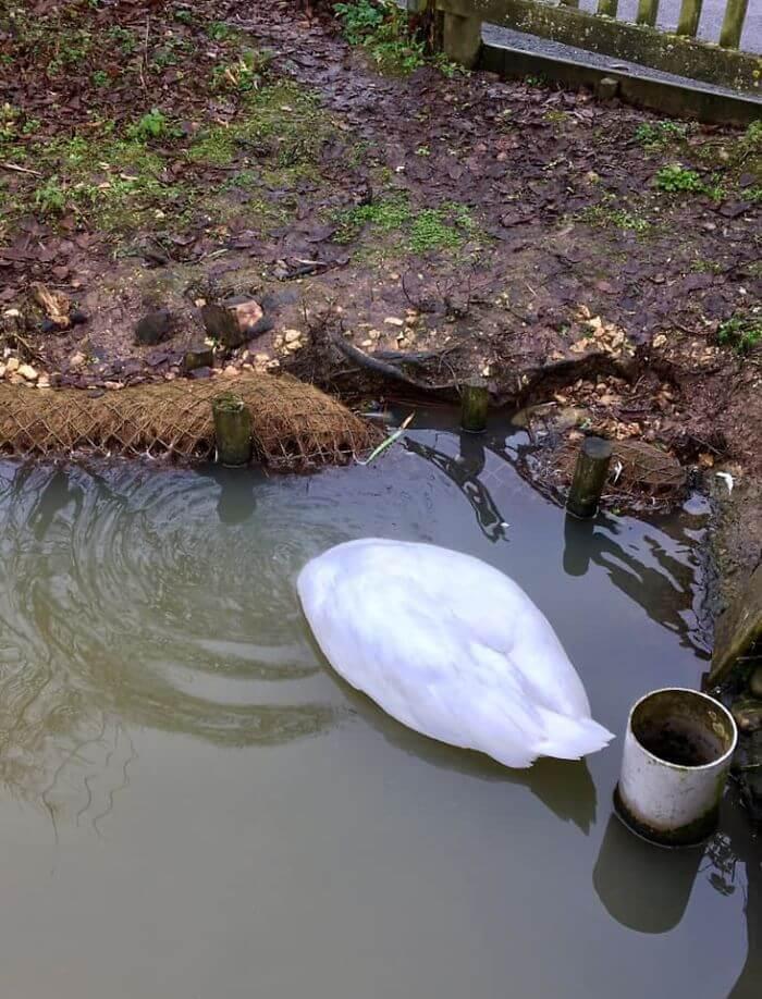 crap images of wildlife 2 (1)