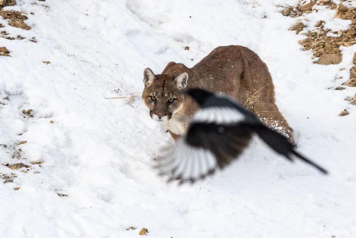 crap images of wildlife 20 (1)