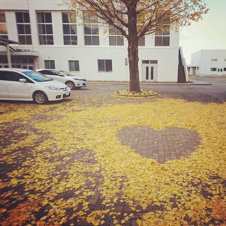 fallen leaves artwork