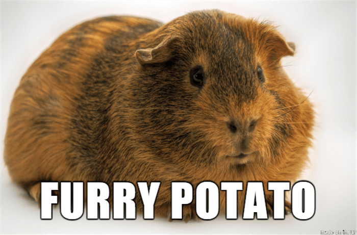 if animal names were honest