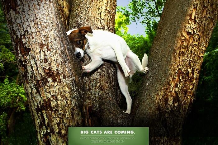 zoo advertisements 10 (1)