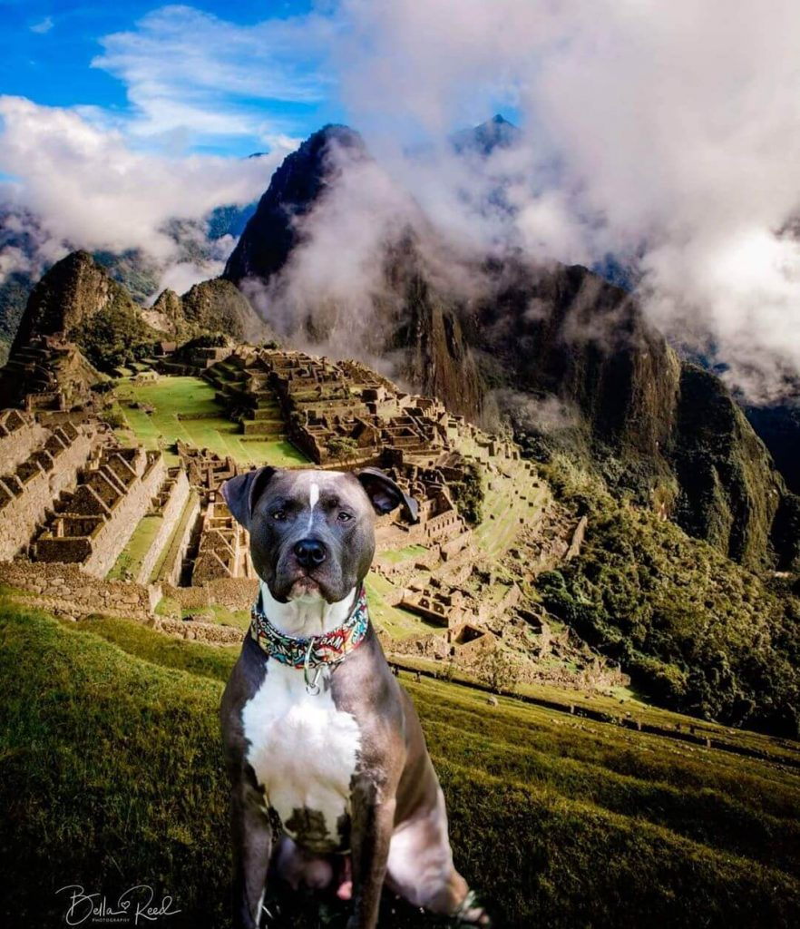 dogs have traveled all over the world