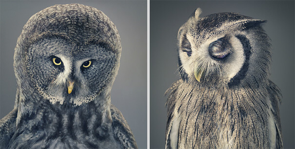 Tim Flach More Than Human