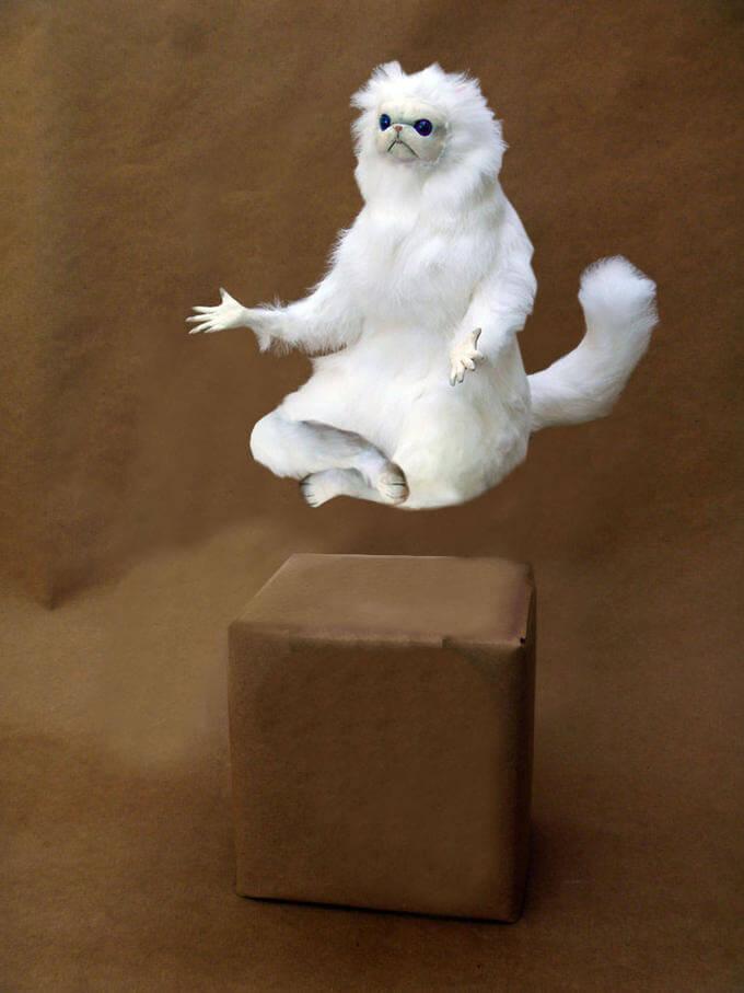 The Persian Cat Room Guardian meditating