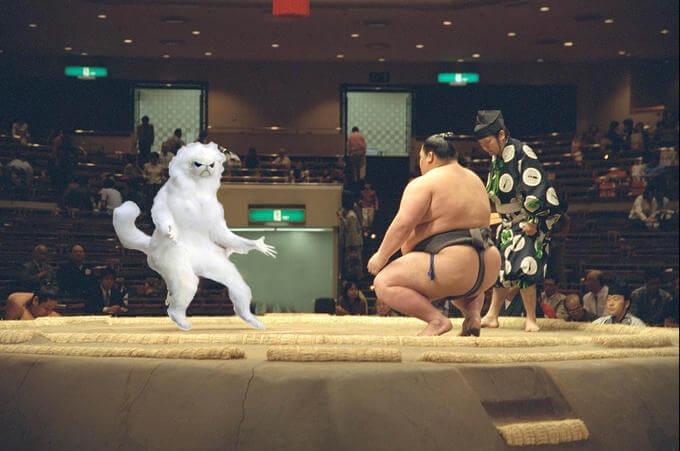 The Persian Cat Room Guardian in sumo ring